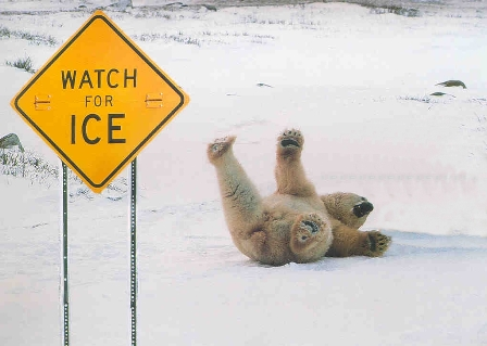 ice-bear-fall1